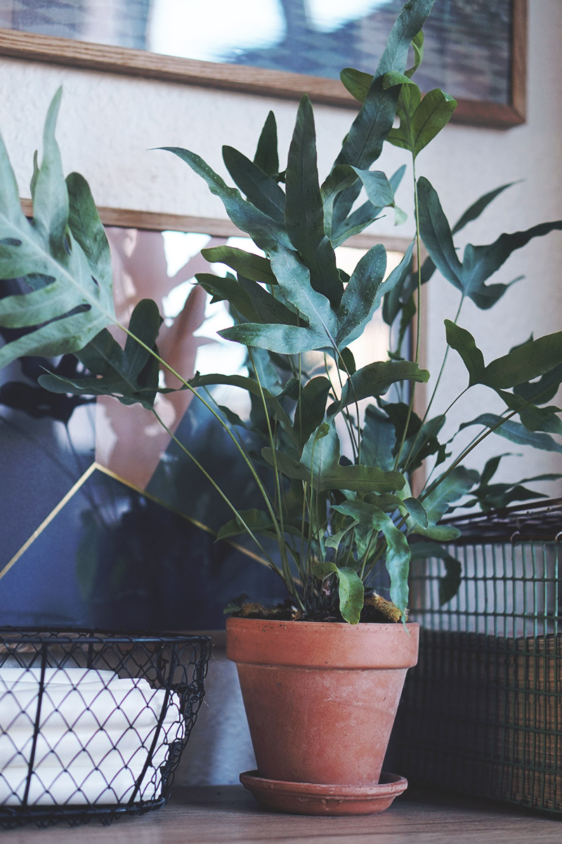 Den smukkeste <strong>plantebog</strong> og nye planter til lejligheden 13