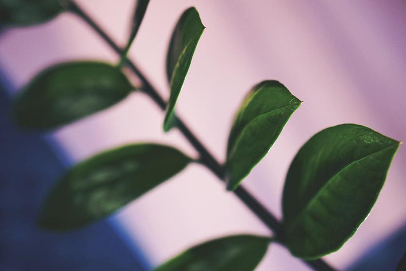 Den smukkeste <strong>plantebog</strong> og nye planter til lejligheden 5