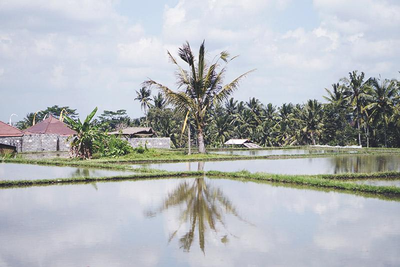 REJSE GUIDE <strong>BALI</strong> - Ubud, Lembongan, Ceningan & Sanur 17