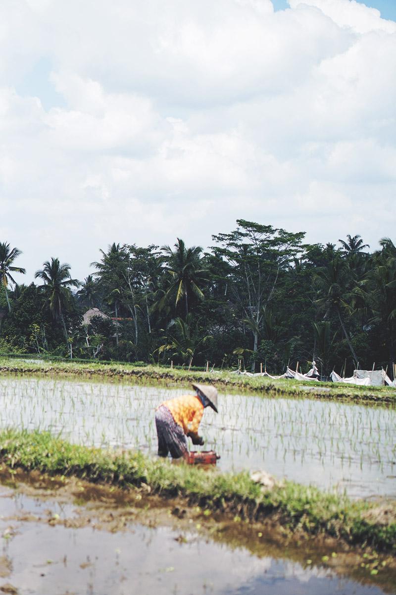 REJSE GUIDE <strong>BALI</strong> - Ubud, Lembongan, Ceningan & Sanur 19