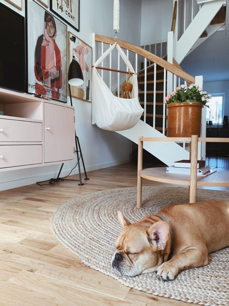 Tanker om at få <strong>hund og baby</strong> på samme tid: Mød Albert - Vores franske bulldog 1