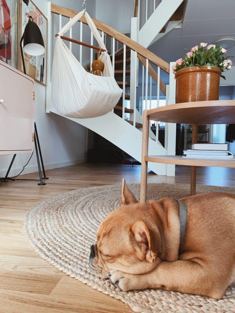 Tanker om at få <strong>hund og baby</strong> på samme tid: Mød Albert - Vores franske bulldog 5