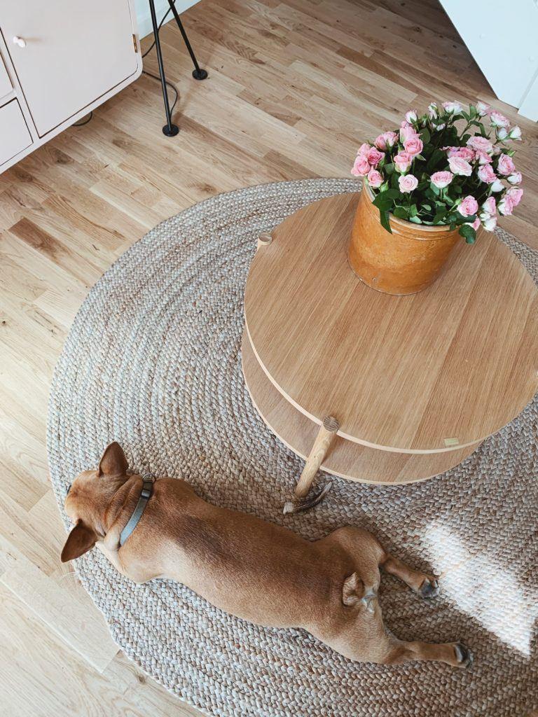 Tanker om at få <strong>hund og baby</strong> på samme tid: Mød Albert - Vores franske bulldog 3