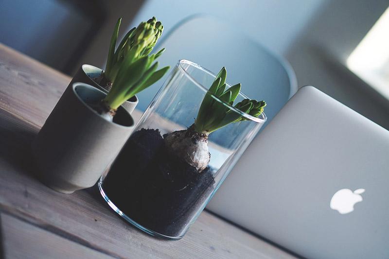 Den smukkeste <strong>plantebog</strong> og nye planter til lejligheden 15